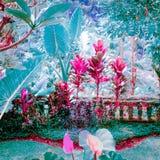 幻想热带庭院的超现实的颜色 库存图片