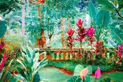 幻想热带庭院的超现实的颜色 免版税图库摄影