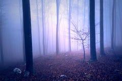 幻想紫色蓝色色的有雾的森林 库存照片