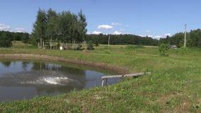 幼儿女孩跳筑成池塘从木桥的湖水 免版税库存图片