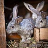 幼小兔子弹出在储藏箱外面 免版税库存图片