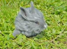 幼小兔子10 免版税库存图片