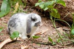 幼小兔子 库存照片