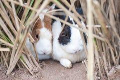幼小兔子 免版税库存图片