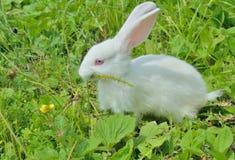 幼小兔子12 图库摄影