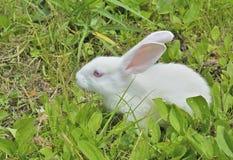 幼小兔子10 库存照片