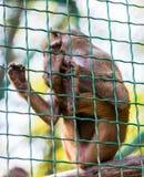 幼小动物猴子狒狒 免版税库存图片
