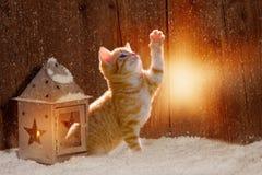 幼小小猫坐在光发光的圣诞节 库存图片