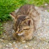 幼小小猫 免版税库存图片