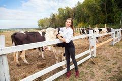 幼小成人逗人喜爱的女孩拥抱母牛,看照相机 库存图片