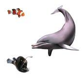 幼小海豚。 修士鱼和小丑鱼 免版税库存照片