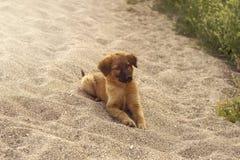 幼小滑稽的小狗 库存图片
