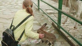 幼小白种人白肤金发的哺养的兔子在联络动物园里 影视素材
