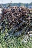 幼小白鹭的羽毛 库存照片