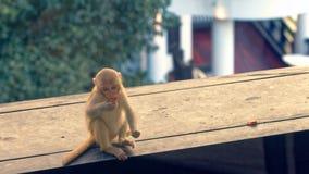 幼小短尾猿猴子 免版税库存图片