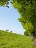幼小羊羔的春天图象 免版税库存照片