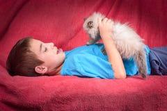 幼小蓝蚝喜马拉雅波斯小猫和逗人喜爱的男孩 图库摄影