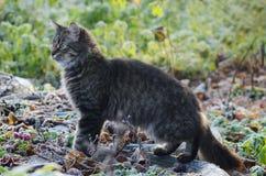 幼小蓬松灰色家猫画象在一个晴朗的森林采取了宠物 库存照片