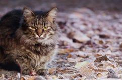 幼小蓬松灰色家猫画象在一个晴朗的森林采取了宠物 免版税库存图片