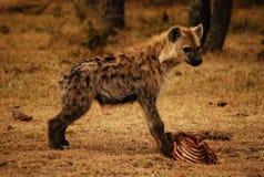 幼小鬣狗 库存图片