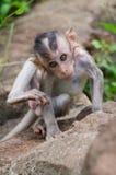幼小猴子 免版税库存照片