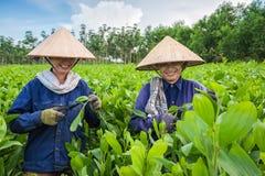 幼木农场的妇女 免版税图库摄影