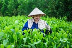 幼木农场的妇女 免版税库存图片
