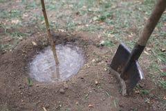 幼木在土壤增长 在湿树附近的铁锹 生长结构树 农业 重新造林 拯救世界 免版税库存图片
