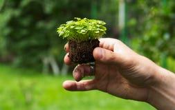年轻幼木在手上 有地球的绿色植物在男性手上 免版税图库摄影