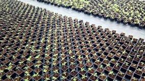 幼木托儿所,生长自温室的年幼植物 股票录像