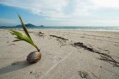 幼木椰子 免版税库存照片