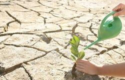 幼木沙漠。 免版税库存照片