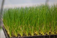 幼木生态世界环境日CSR幼木的耕种是绿色Eco友好的地球医疗保健食物庭院 库存图片