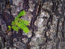 幼木生长新芽 库存图片