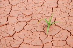 幼木草生长低谷旱田裂缝 免版税图库摄影