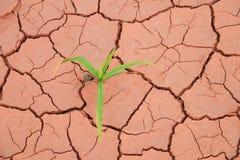 幼木草生长低谷旱田裂缝 库存图片