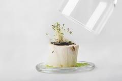 幼木素食主义者或素食主义者开胃菜在小木罐o的 图库摄影