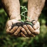 年幼植物在反对绿色春天背景的手上 免版税库存照片