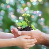 年幼植物在反对绿色背景的手上 库存图片