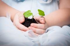 年幼植物在女婴的手上 免版税库存图片