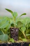 年幼植物新的生活,绿色树苗生态世界环境日CSR幼木去绿色Eco友好的地球医疗保健 库存图片
