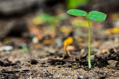 年幼植物生长 免版税库存图片