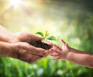 给年幼植物的老人儿童环境保护 免版税库存照片