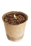 年幼植物从一块沃土增长被隔绝 免版税库存照片