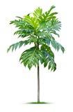 年幼植物 免版税库存照片