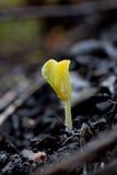 年幼植物 库存图片
