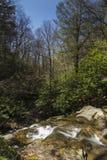 幽谷Burney足迹,吹的岩石, NC 免版税库存照片