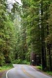 幽静乡下公路通过森林 免版税库存图片