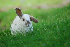 幽静的兔宝宝 免版税库存图片