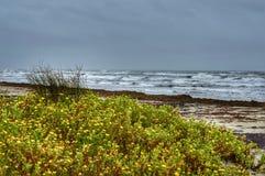 幽静的海滩 库存照片